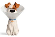 Photo of Pets 2: Mit Sky Ticket für nur 4,99 € (statt 9,99 €) streamen
