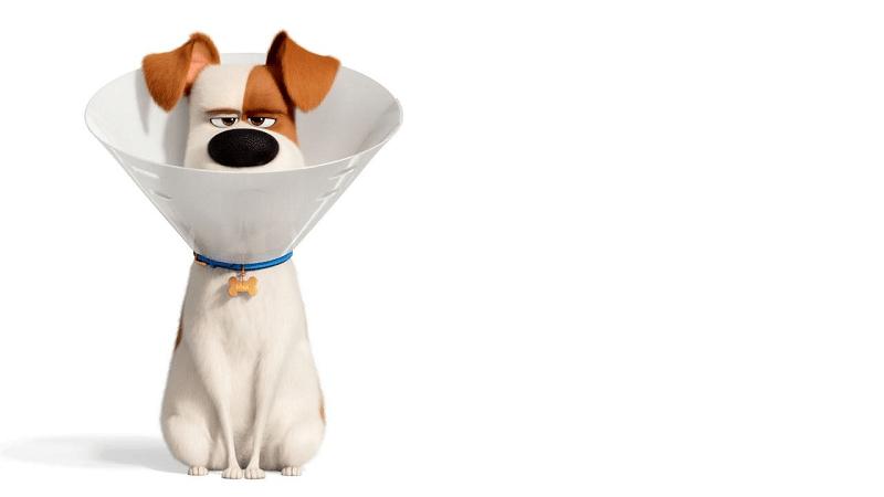 Pets 2: Mit Sky Ticket für nur 4,99 € (statt 9,99 €) streamen